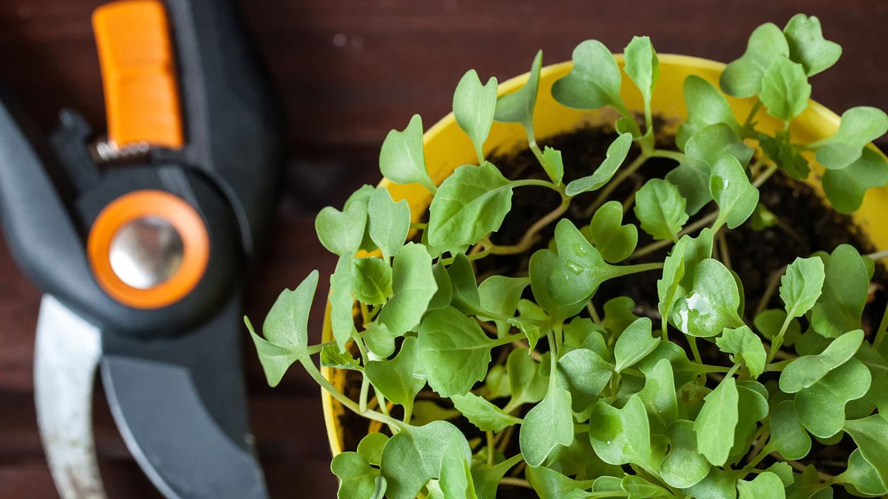 Календарь садовода на апрель 2021: благоприятные дни для посева