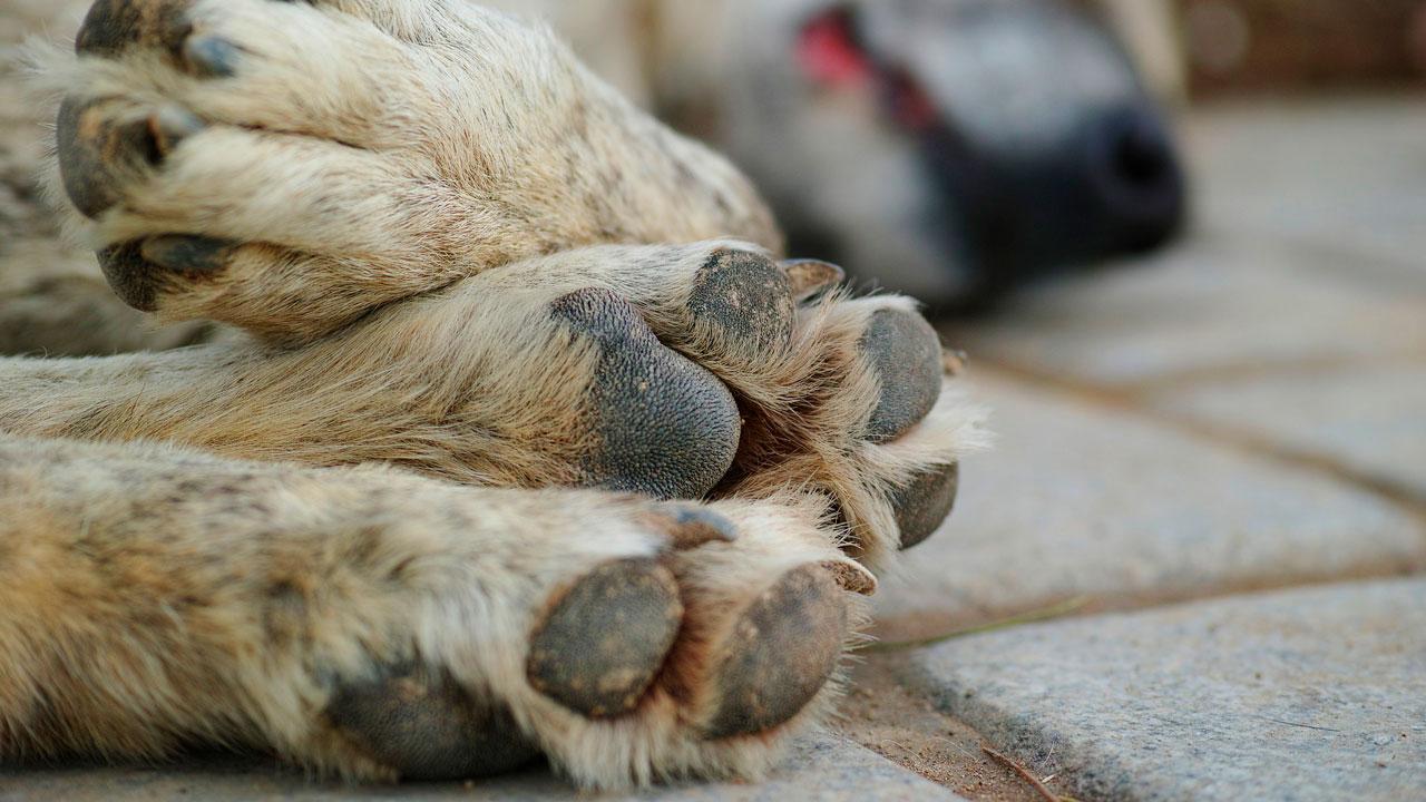 Держат в страхе: как решают проблему с бездомными животными на Южном Урале