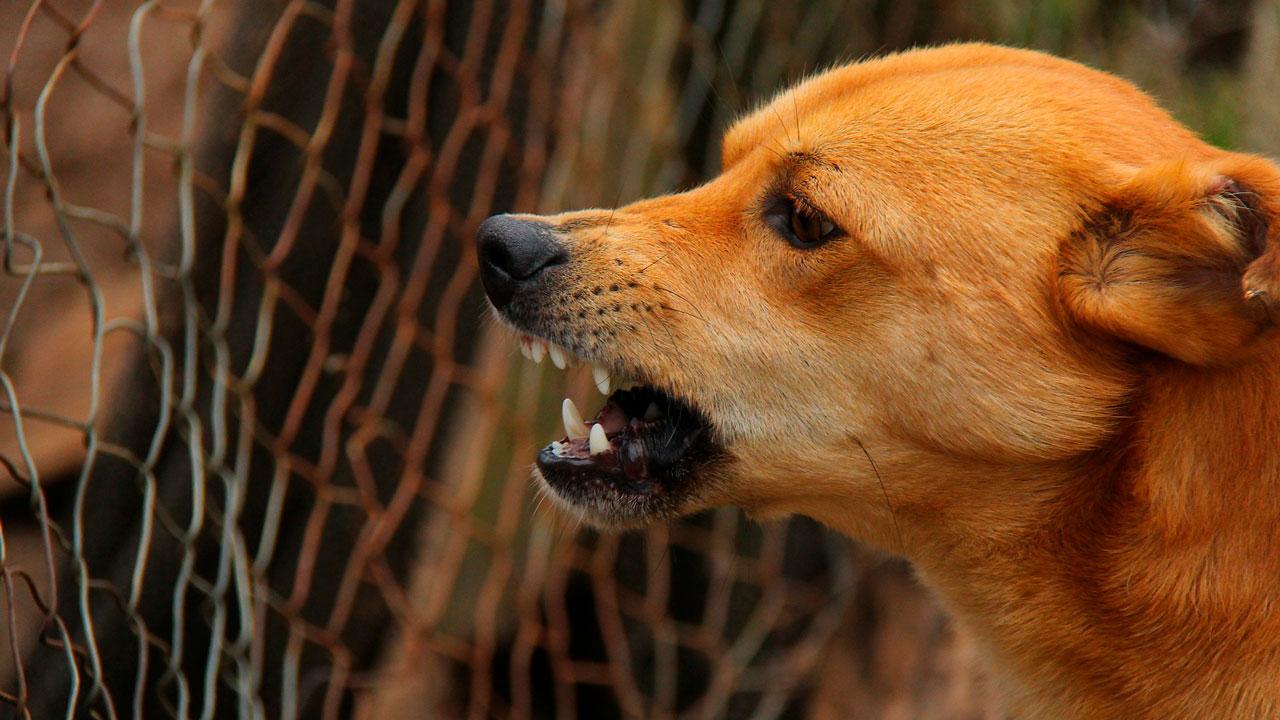 Сорвалась с цепи: собака напала на женщину в Челябинской области