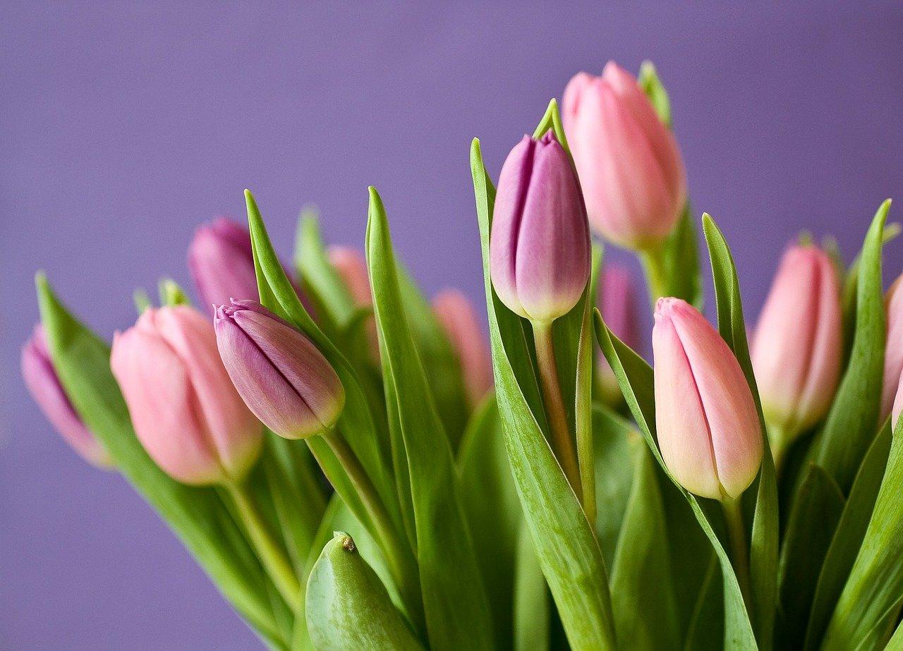 Как выбрать цветы на 8 марта: советы флористов