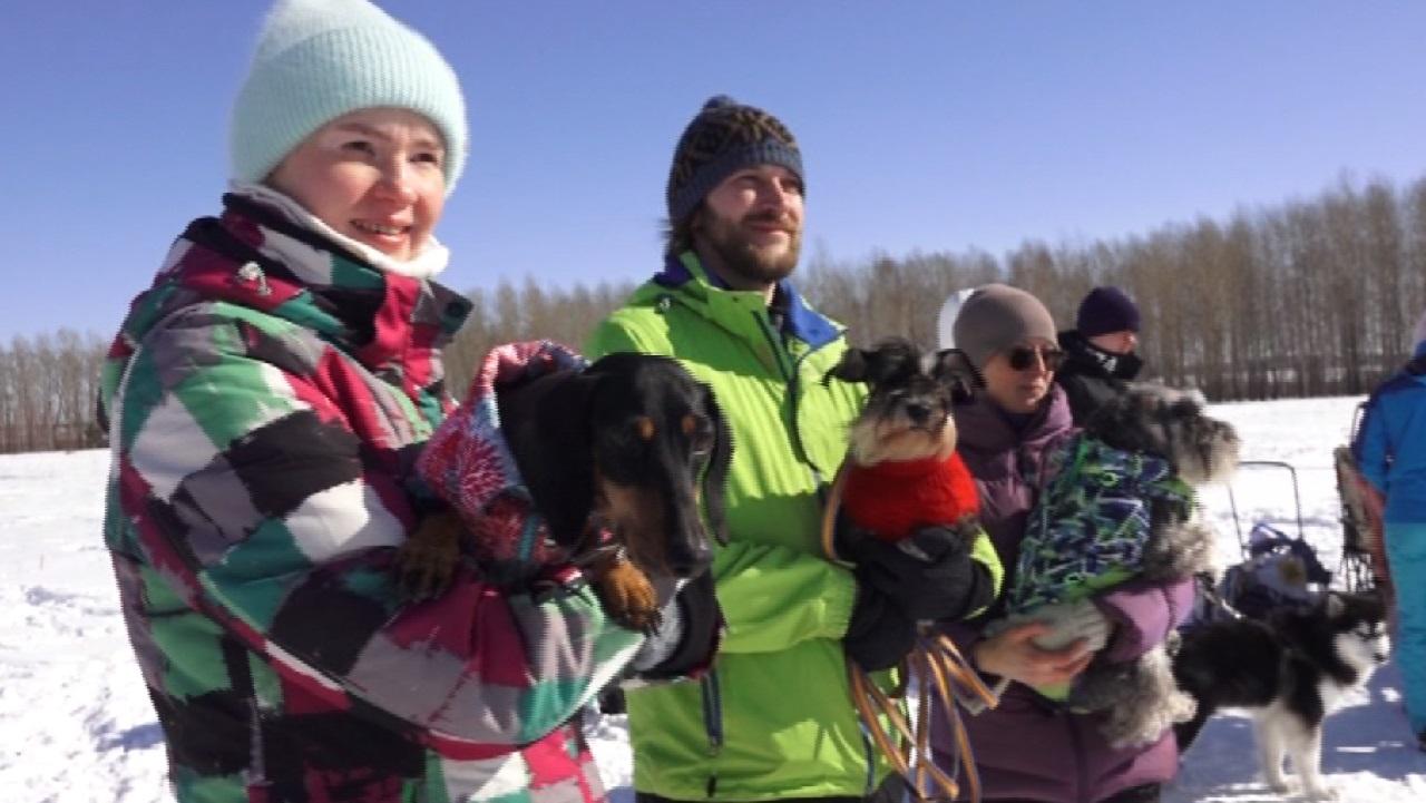 Жажда скорости: на что способны самые быстрые собаки выяснили в Челябинской области