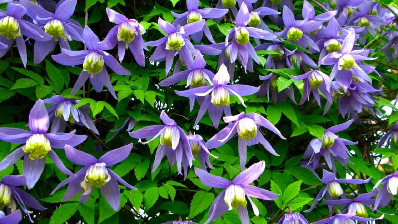 Яркие и неприхотливые: какие цветы посадить в саду