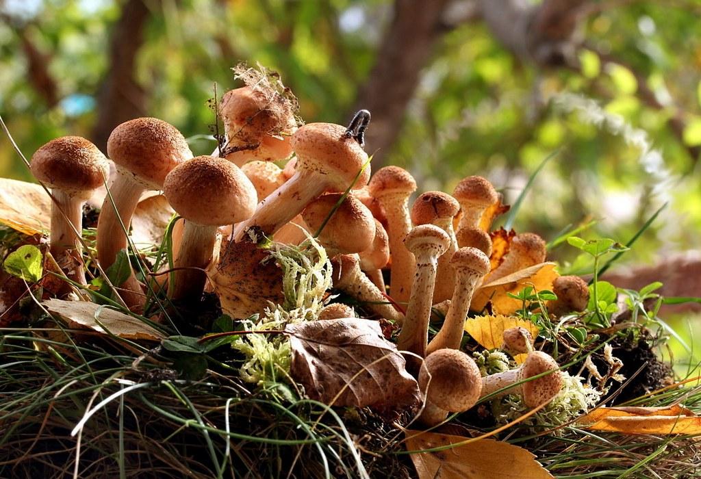 Какие грибы можно собирать на Урале ранней весной ФОТО