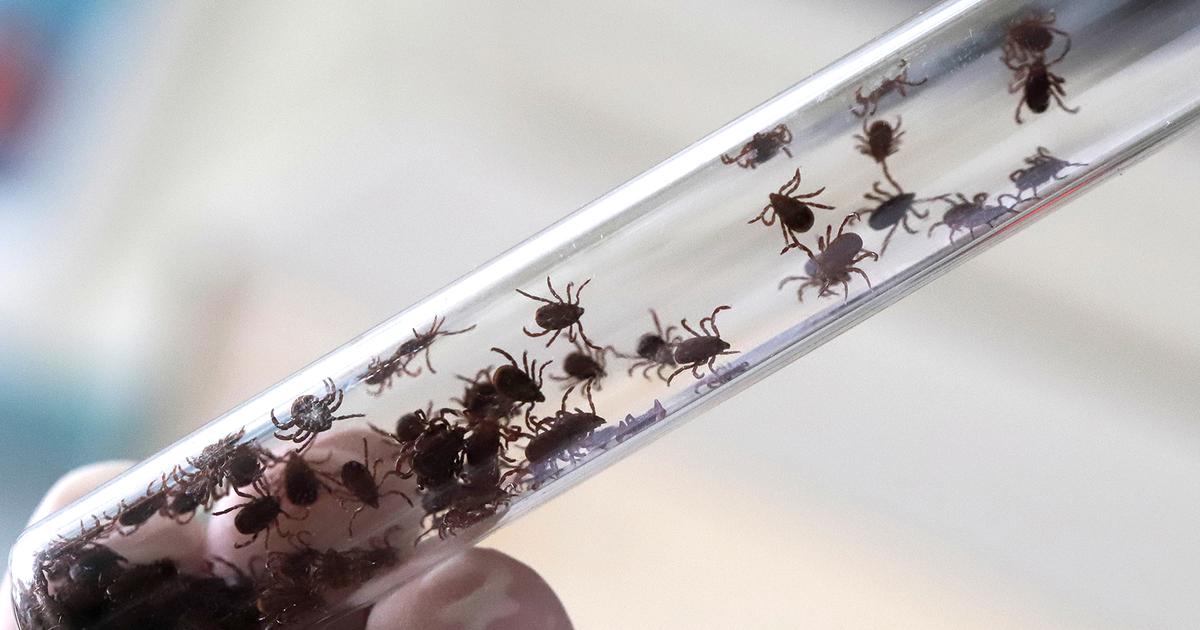 Мелкие, но смертельно опасные: что делать, если укусил клещ