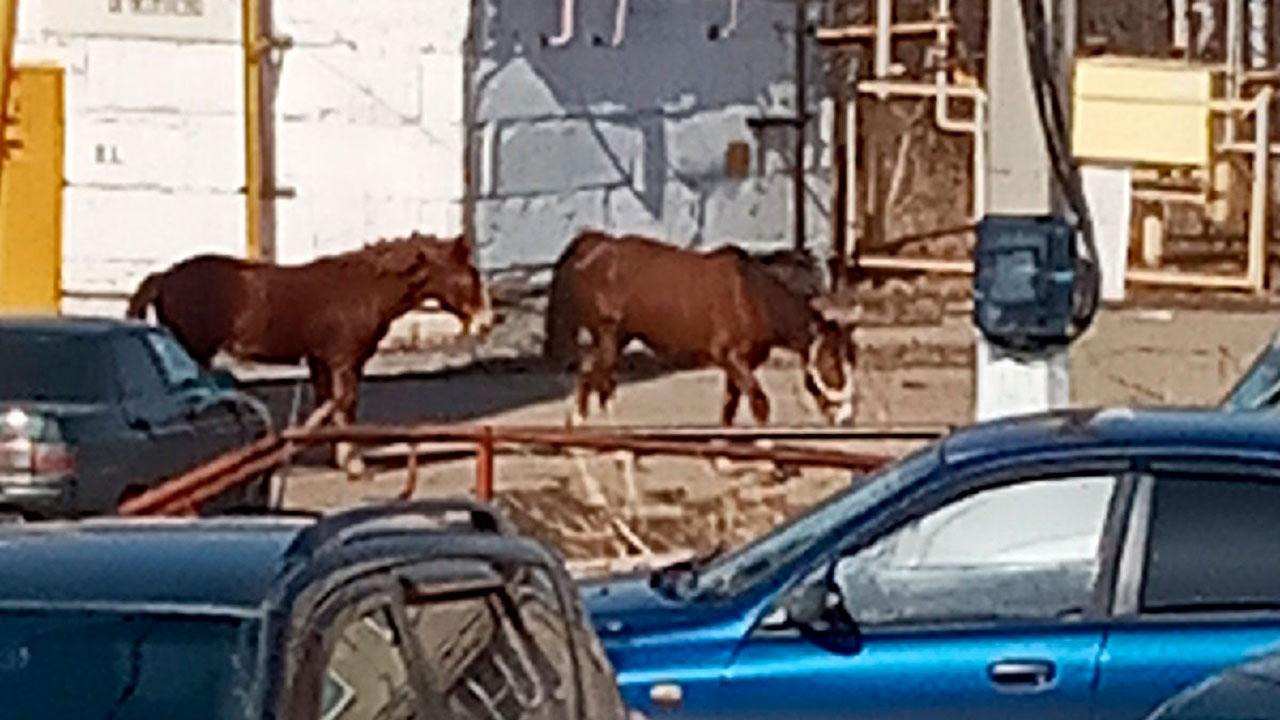 В Челябинской области лошадь напала на женщину с ребенком в коляске