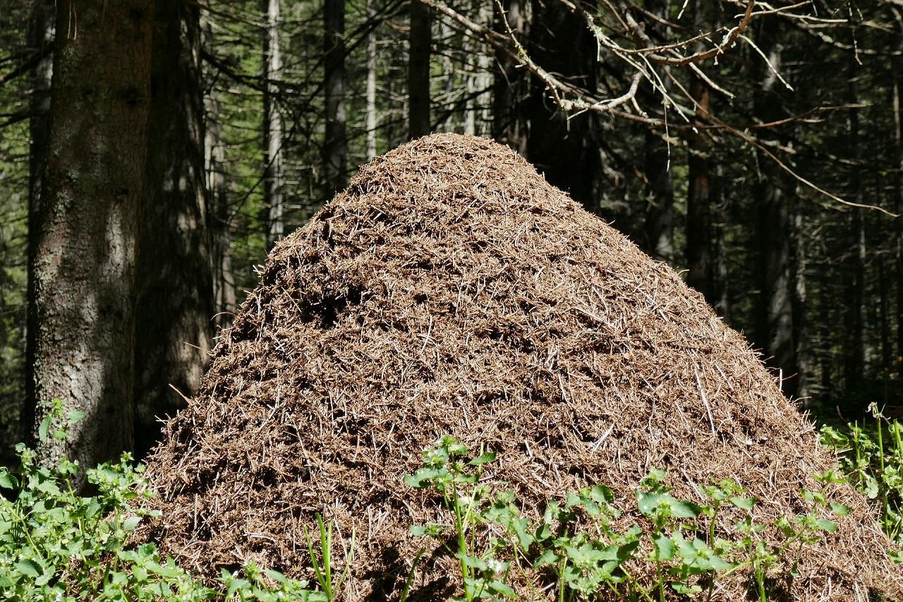 Происходит странное: в лесах Урала рекордно рано проснулись муравьи