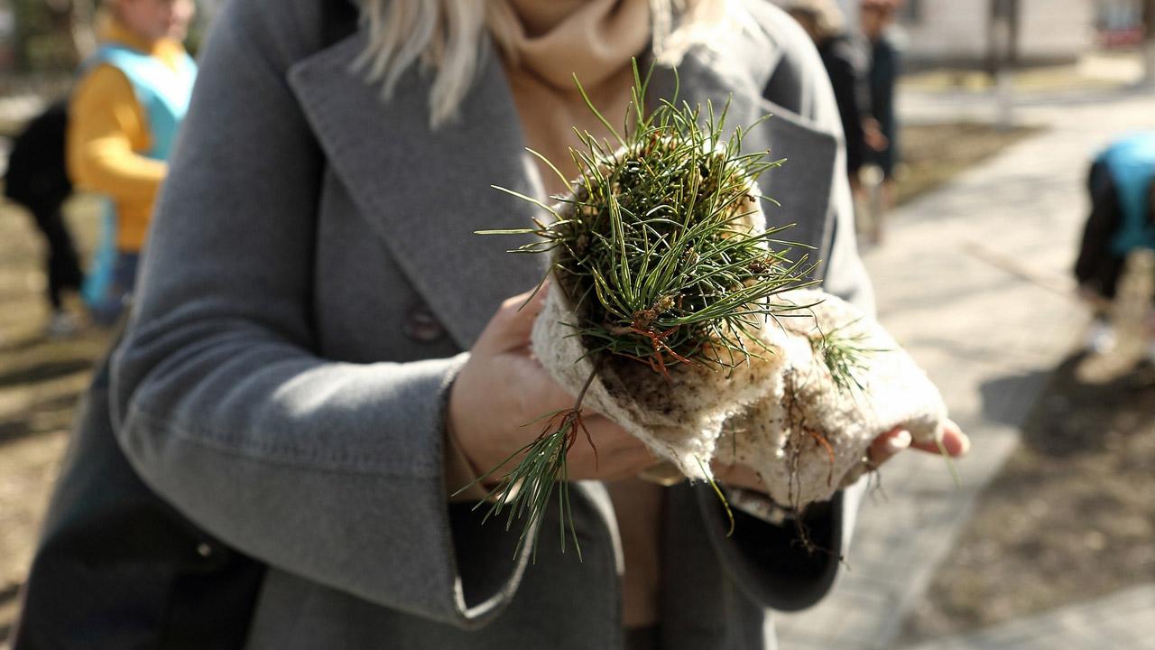 В Челябинске высадили деревья в память о медиках, погибших в пандемию COVID-19