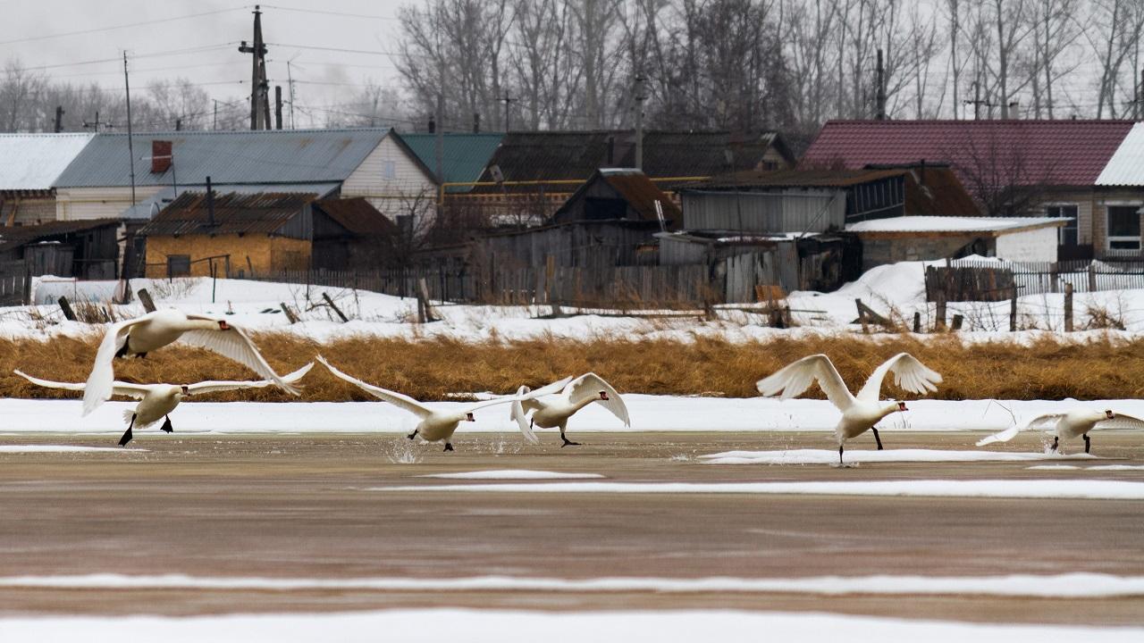 Еще и хрюкают: дюжину злопамятных птиц заметили на Урале