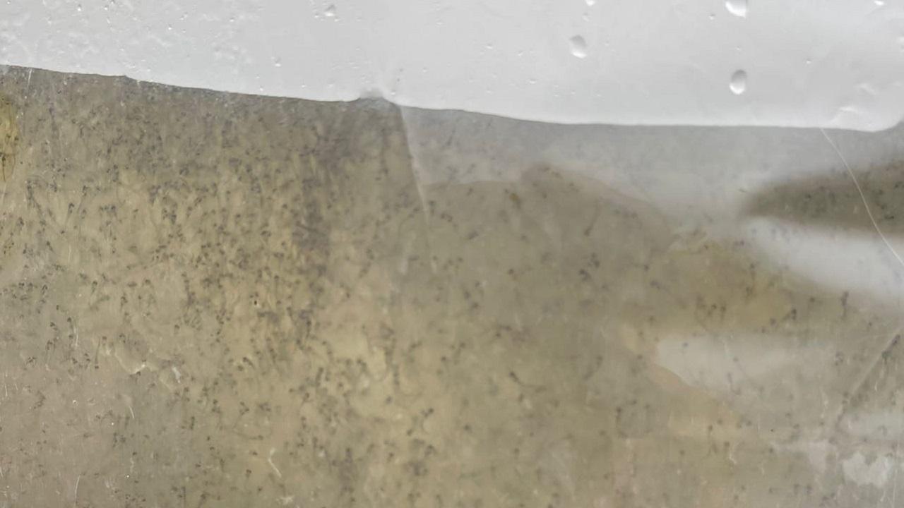 Мешки с личинками: на озере в Челябинской области прошло масштабное зарыбление ВИДЕО
