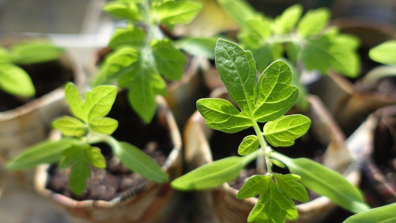 Рассада 2021: южноуральцам рассказали, как отличить поддельные семена