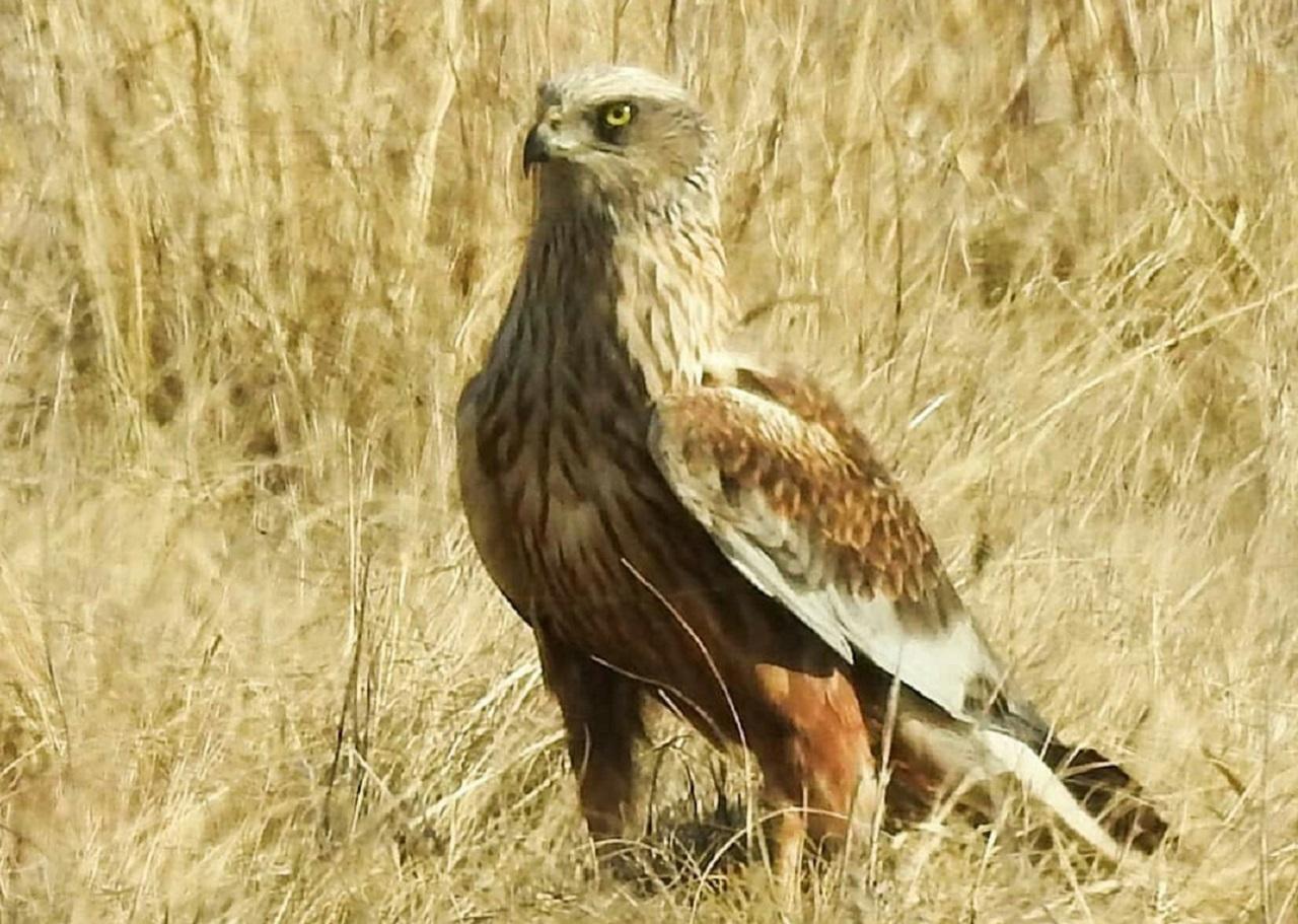 Демонически хохочут: в Челябинской области заметили седых птиц