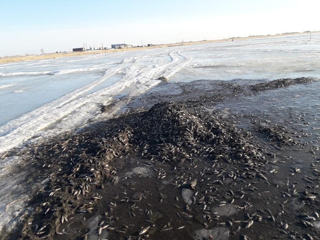 Тысячи мертвых рыб обнаружили на льду озера в Челябинской области