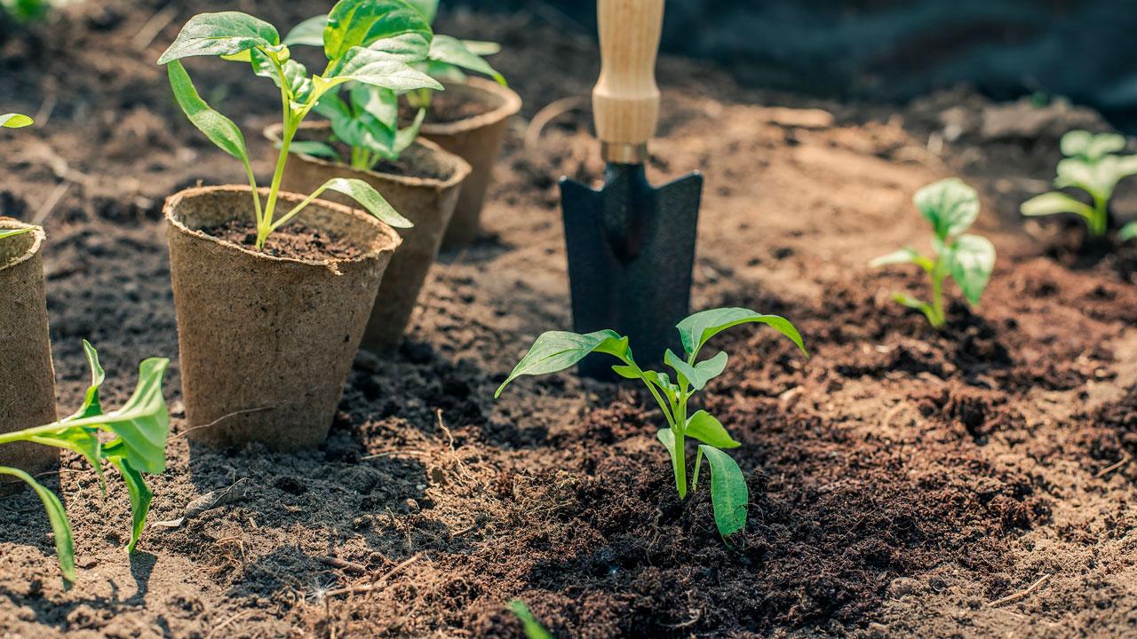 Главные ошибки садоводов: 5 работ, которые могут погубить урожай