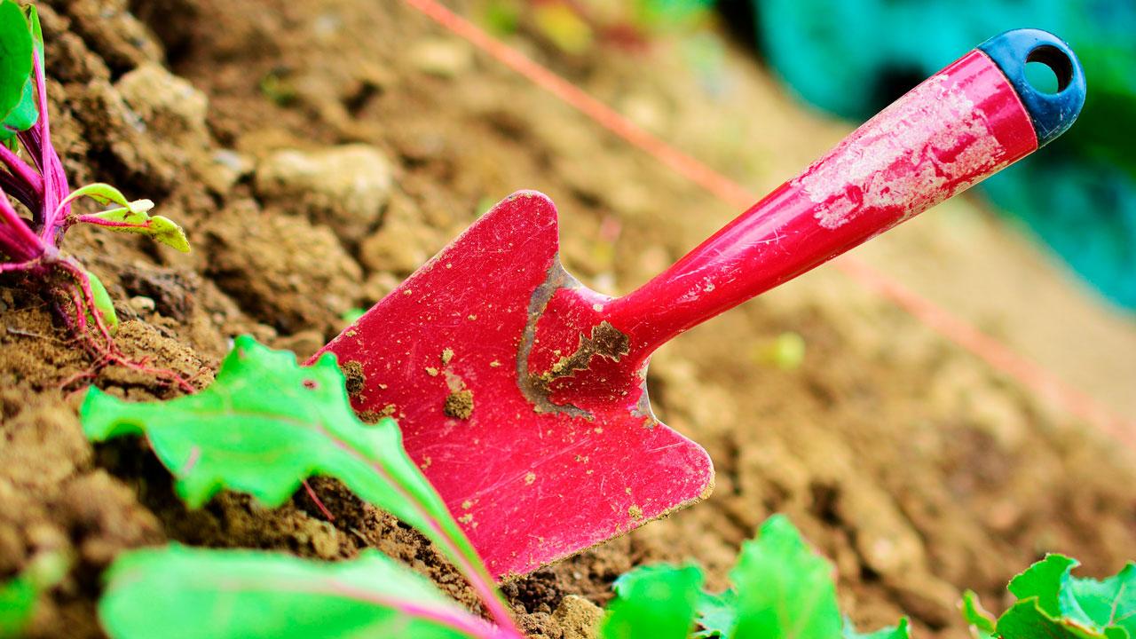 Календарь садовода: благоприятные дни для работы в мае