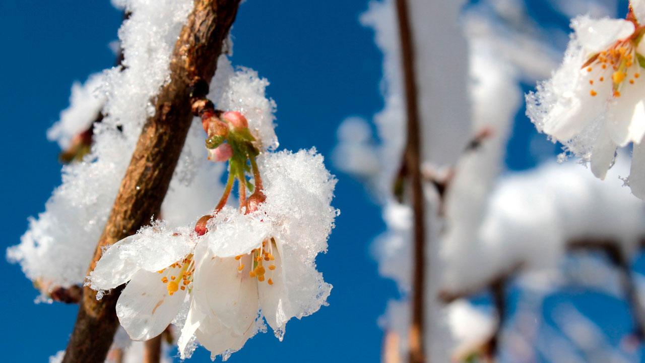 Погода в Челябинской области в мае: прогноз, аномалии и приметы