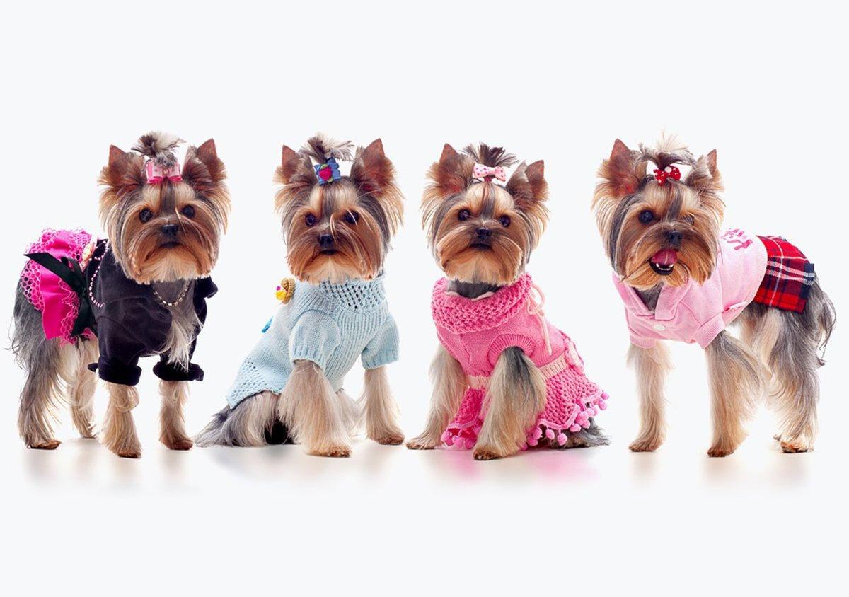 Одежда для собак: прихоть или необходимость