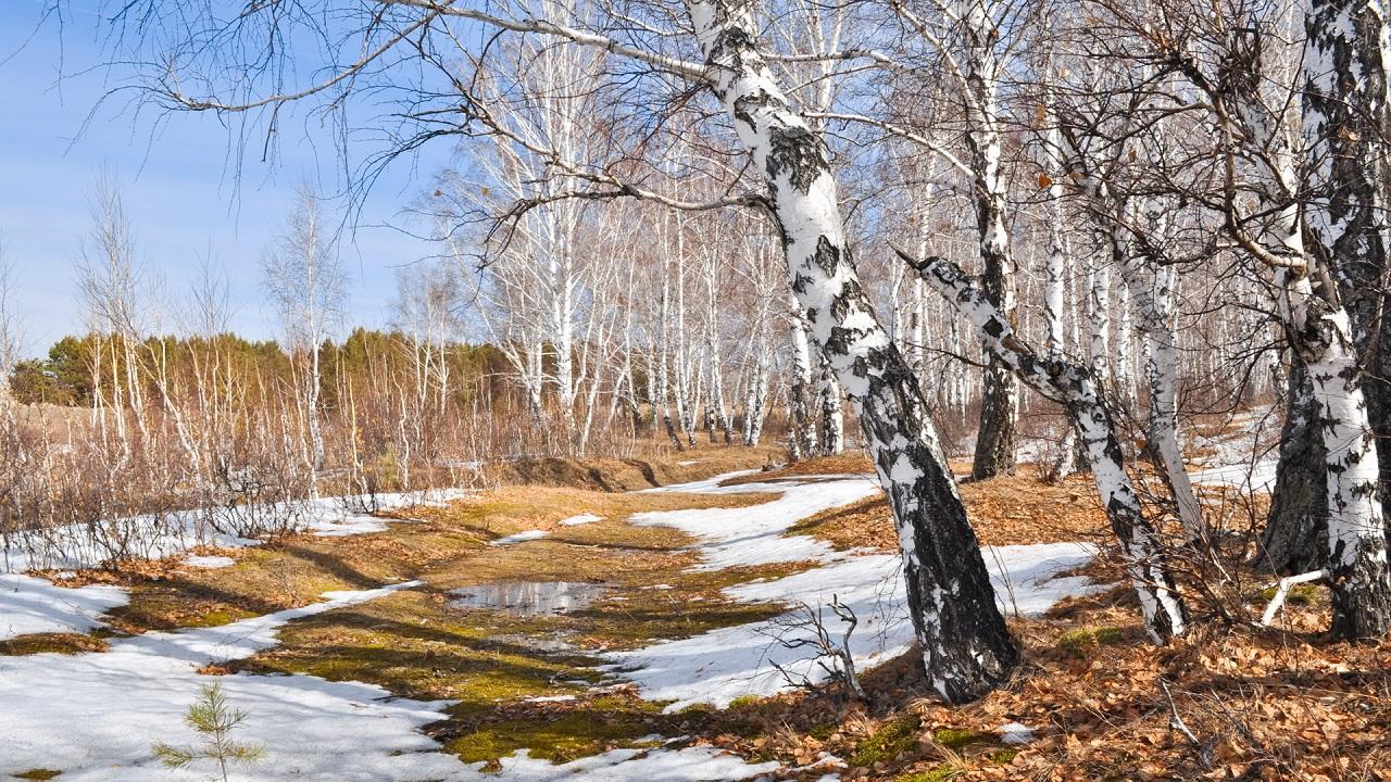 Тепло и солнечно: чем порадует погода в Челябинске