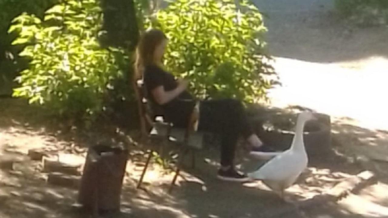 Необычный питомец: в Челябинске девушка гуляет с гусем