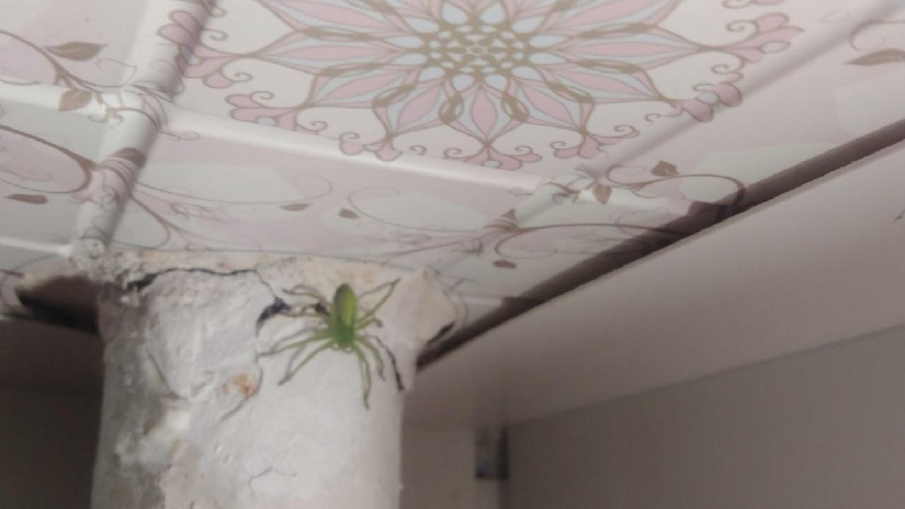 Зелёное нечто: огромный паук поселился в квартире на Южном Урале