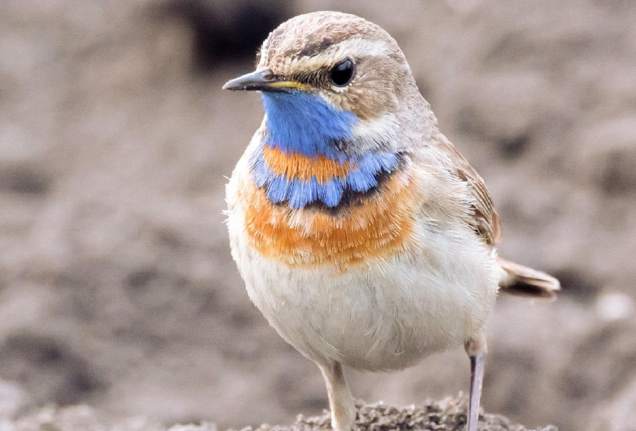 Пернатый босс: птиц со смешными галстуками заметили в Челябинске