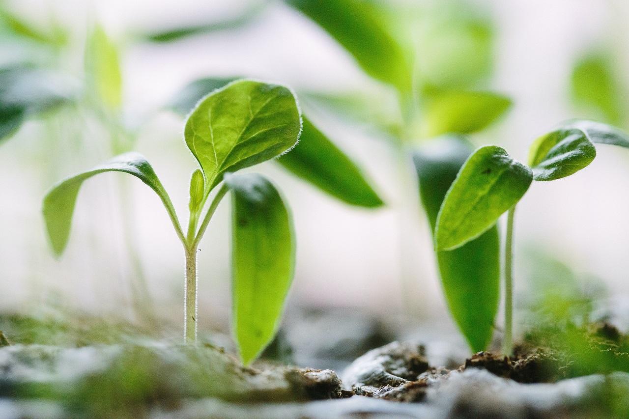 Календарь садовода 2021: как защитить огород и приумножить урожай