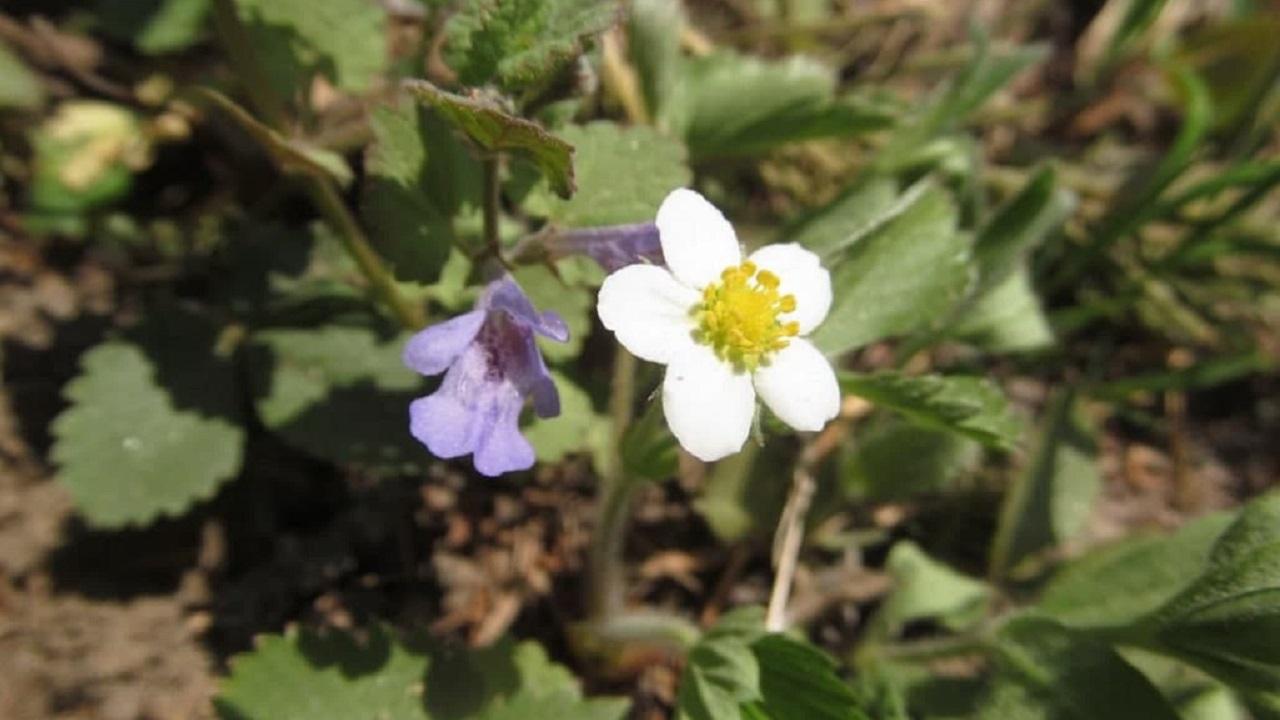 Природа запуталась: жара в Челябинской области разбудила цветы раньше срока
