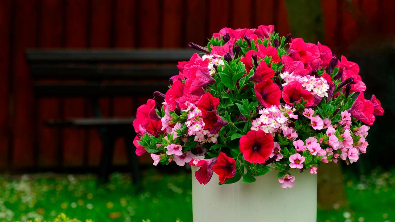 Ночные бабушки: в Челябинской области выкапывают цветы с городских клумб