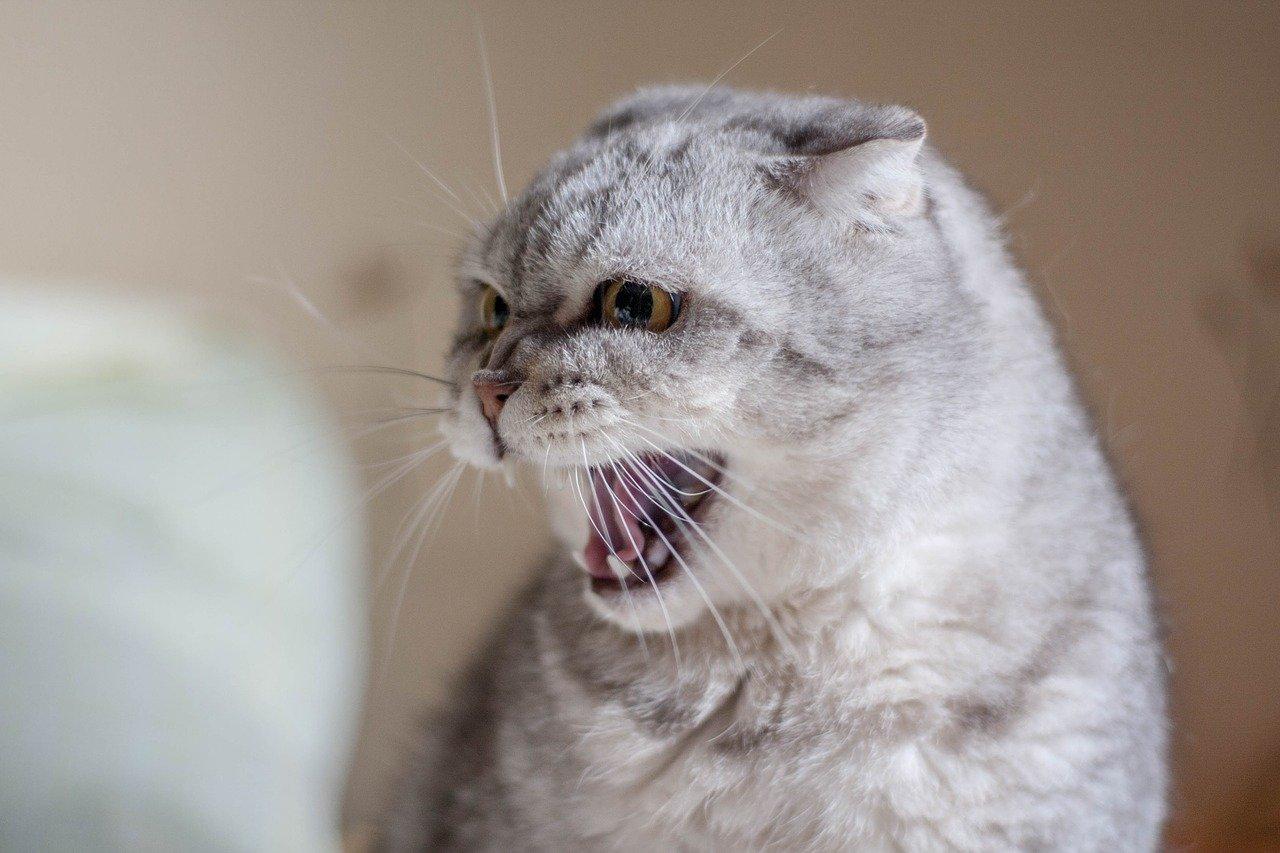 Заражений все больше: Челябинская область попала в число лидеров по бешенству животных