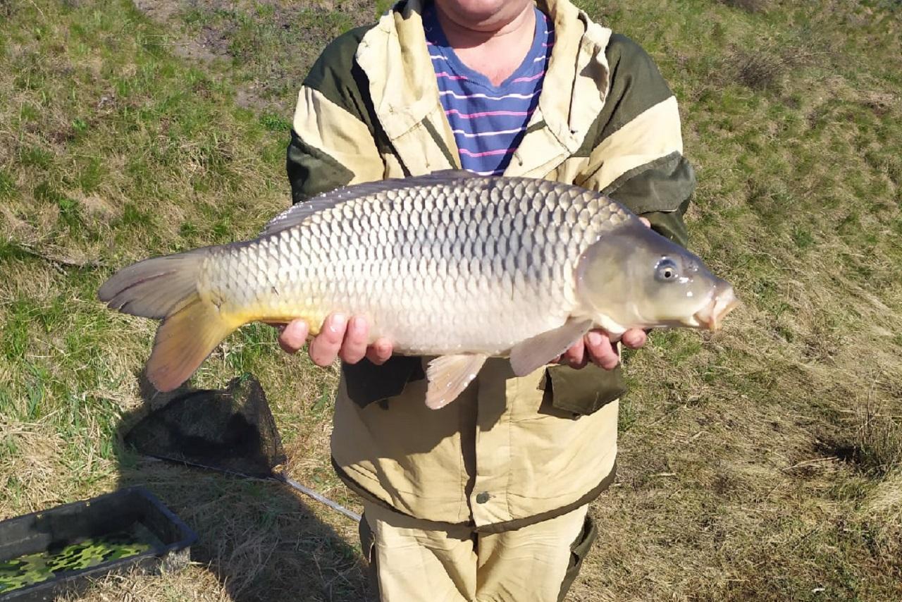 Бешеный клев: в озерах Челябинской области пошли гигантские лещи