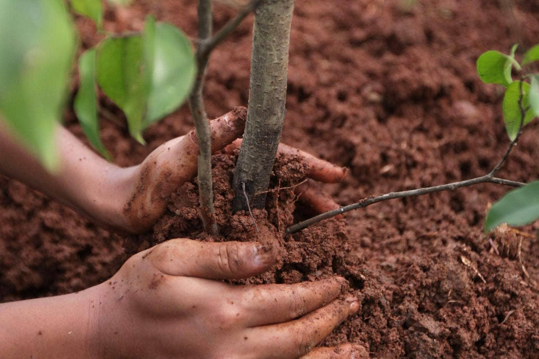 20 тысяч деревьев высадят в Челябинском городском бору в рамках акции «Сад памяти»