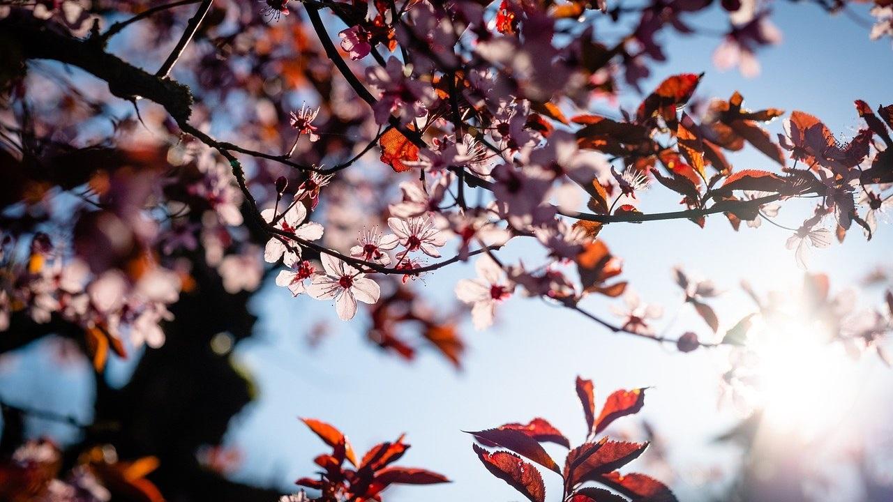 Погода в Челябинске и области: синоптики назвали самый жаркий день мая