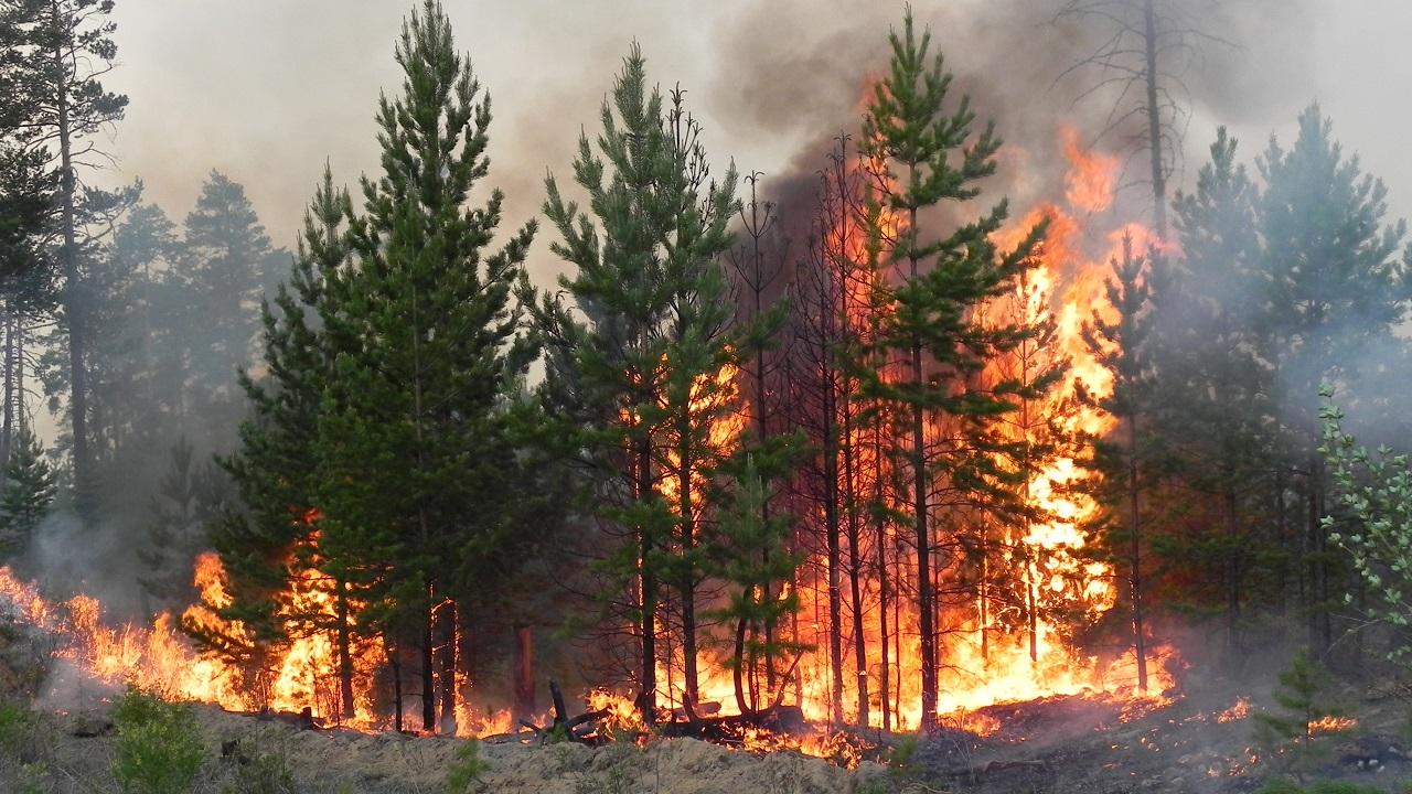 Экстремальная жара: МЧС предупреждает об опасной погоде в Челябинской области
