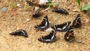 Крылатые сокровища: редких бабочек заметили на Южном Урале ВИДЕО