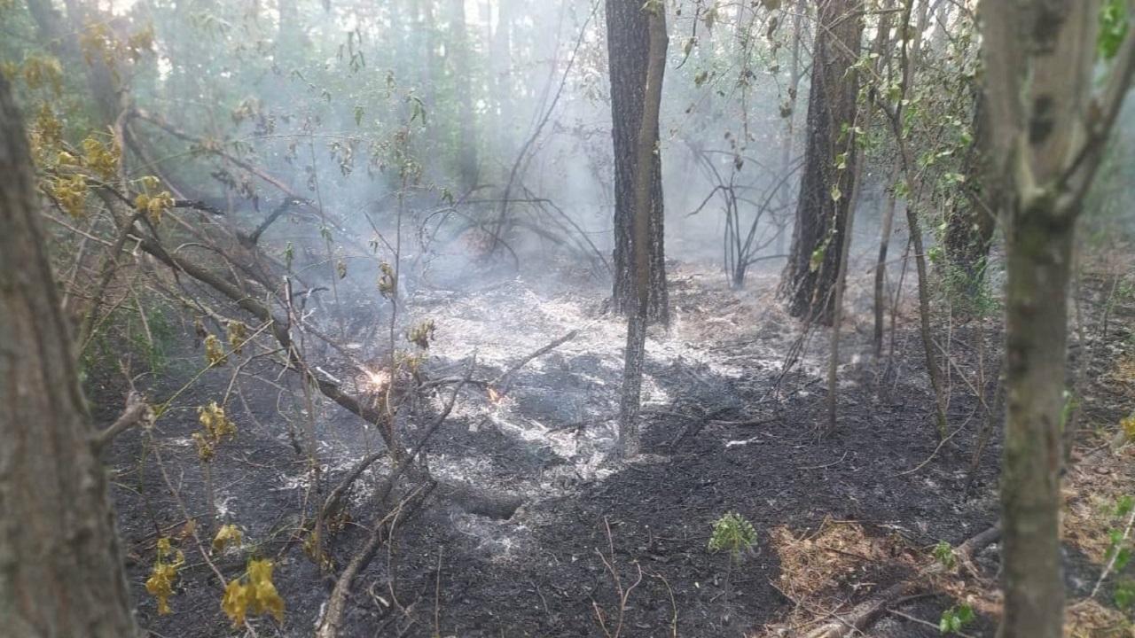 Пожар вспыхнул в городском бору в Челябинске