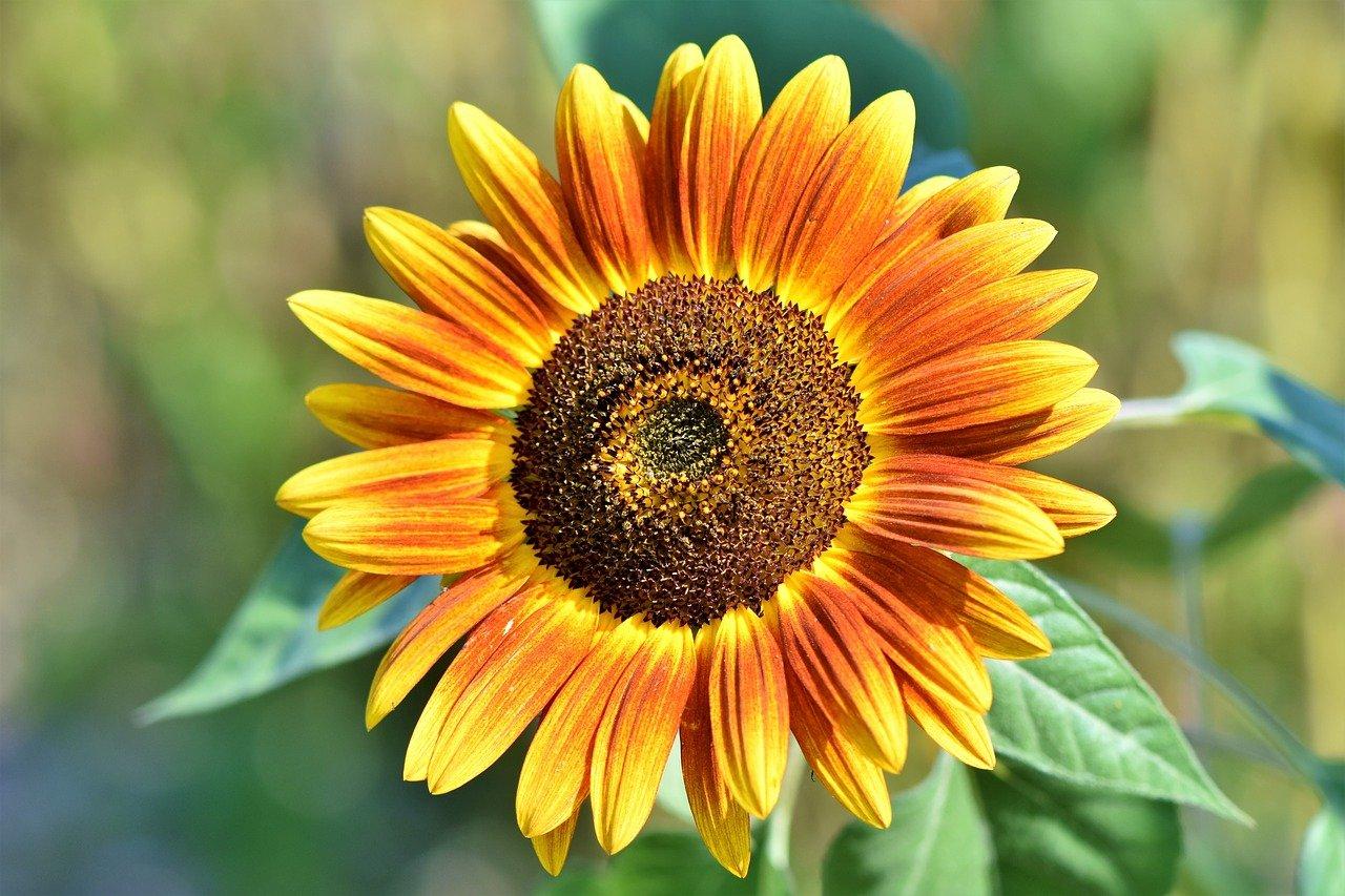 Характер по растениям: цветочный гороскоп для всех знаков зодиака