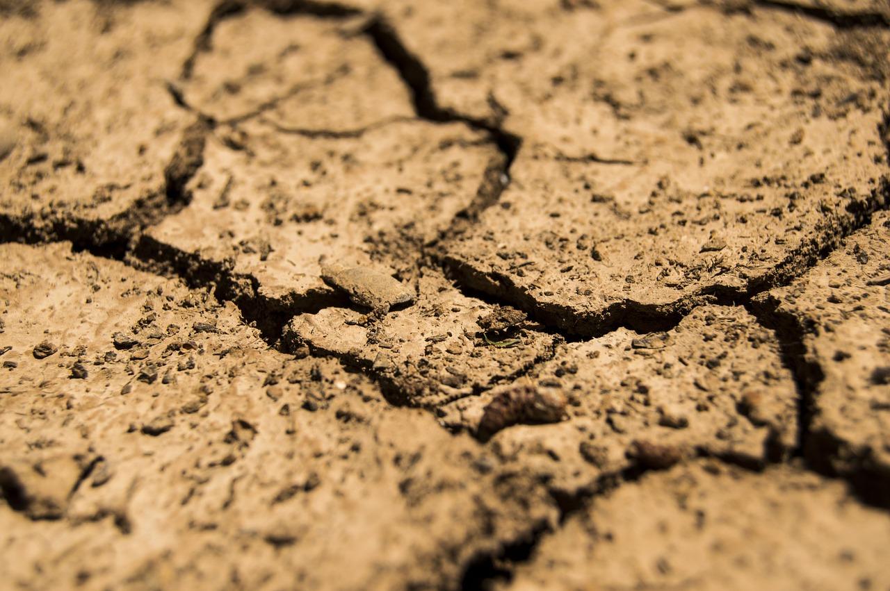 Засуха в Челябинской области: режим ЧС введен в 4 районах