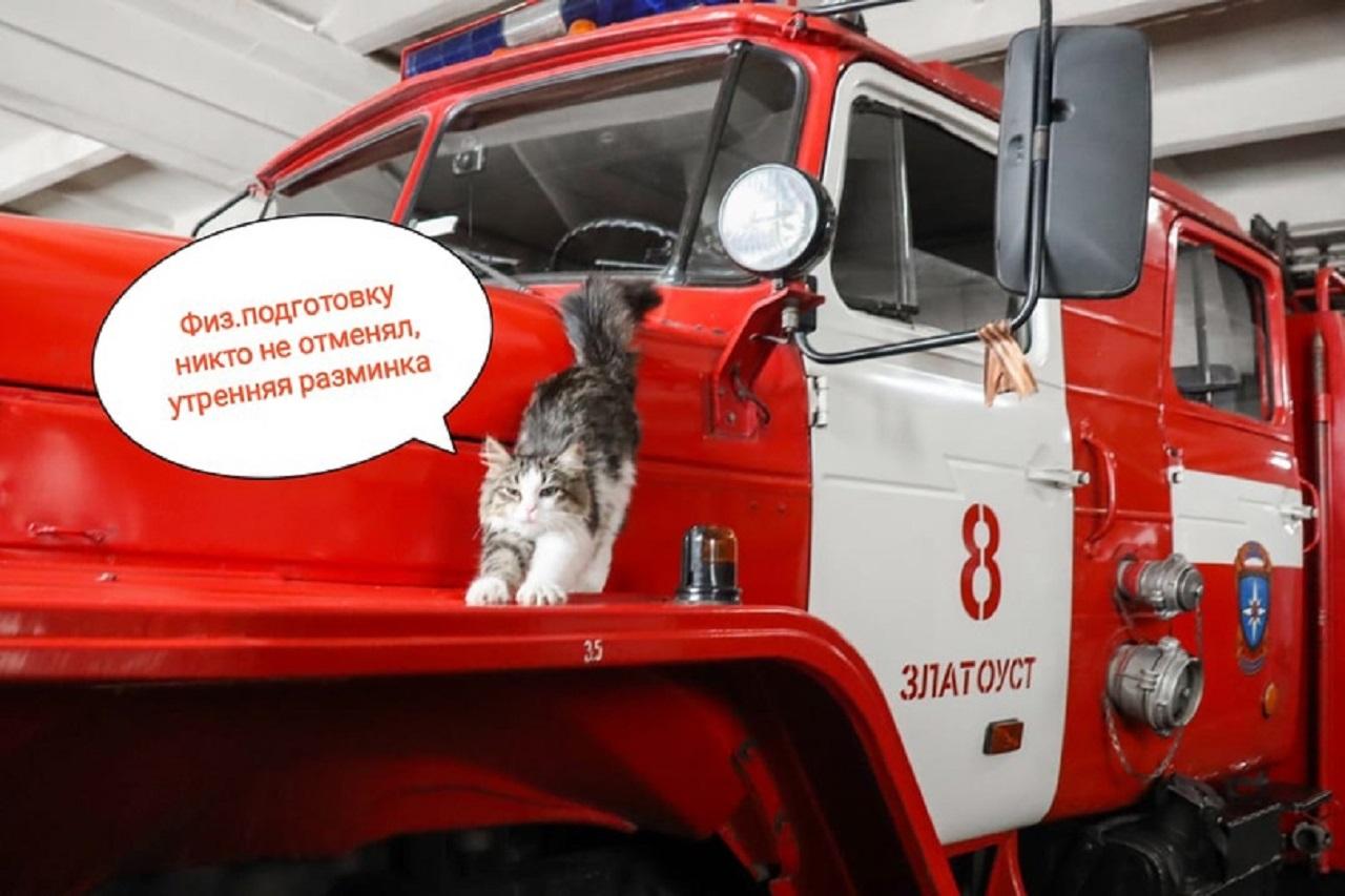 Усатый Кузьмич: в МЧС Челябинской области появился необычный новобранец