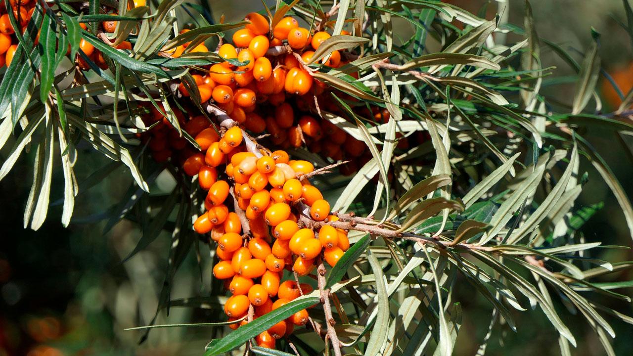 Заряжаемся витаминами летом: топ-5 полезных ягод
