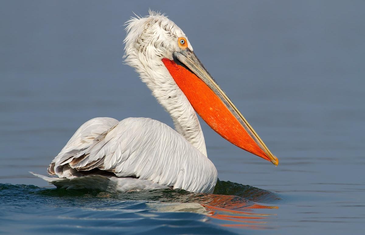 5 редких птиц Челябинской области: необычные, интересные и красивые пернатые ФОТО