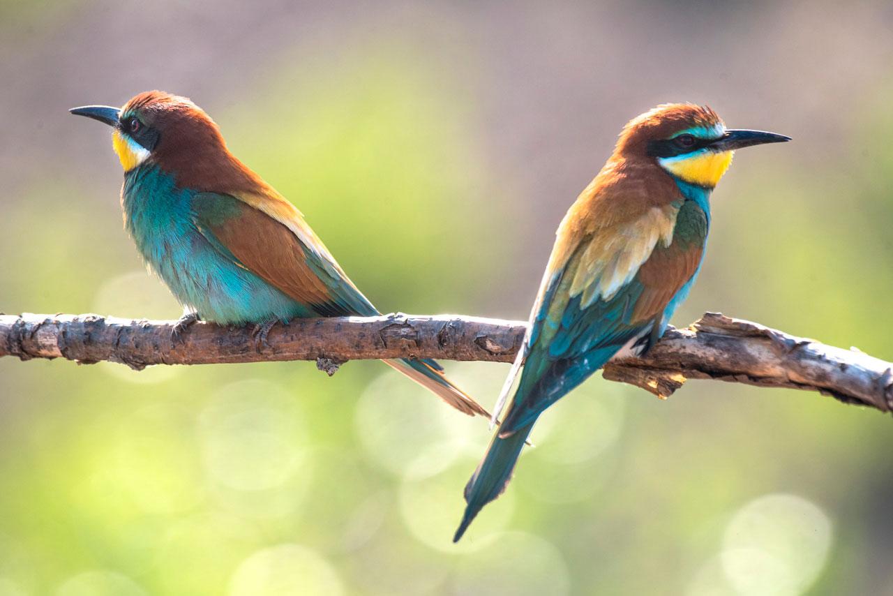 Изумрудных птиц заснял фотограф из Челябинской области
