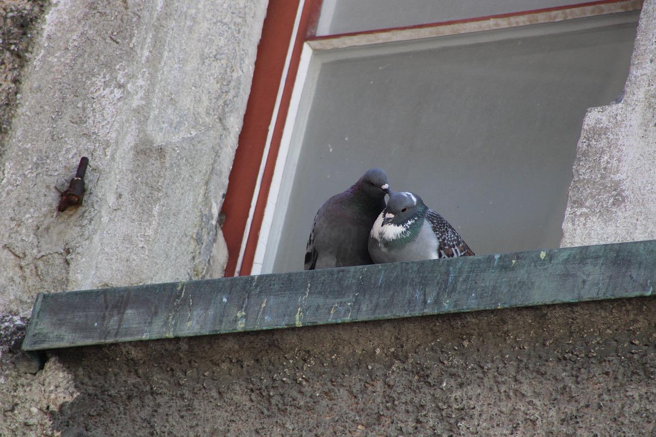 Птицы несчастья: народные приметы, предупреждающие о беде