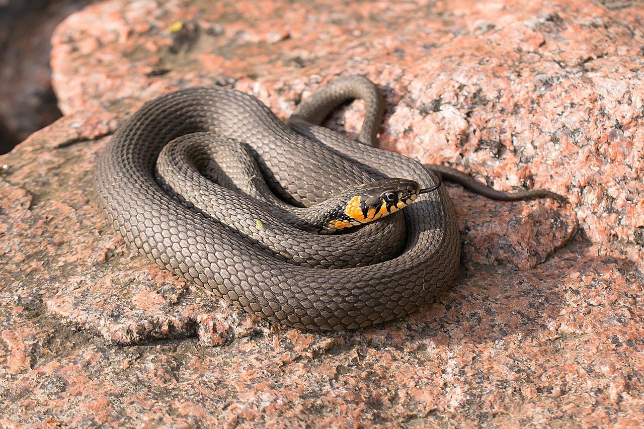 В челябинском парке Гагарина заметили 1,5 метровую змею ВИДЕО