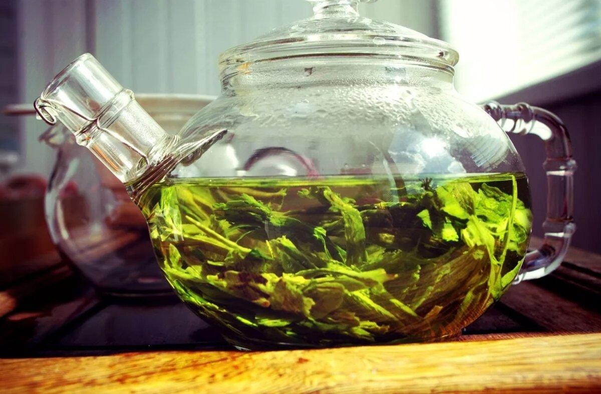 Зеленый чай против черного: какой полезнее и как правильно заваривать