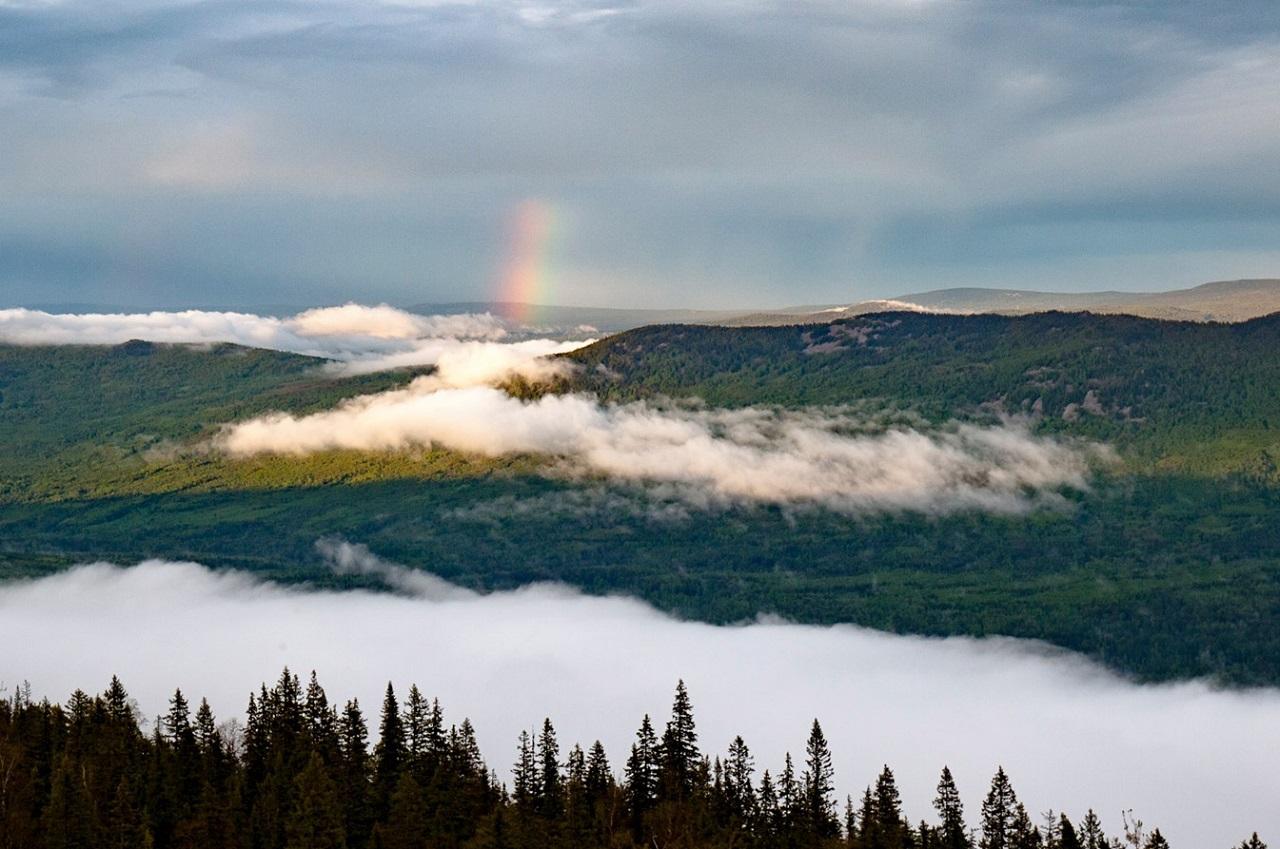 Поразительное зрелище: склоны Уральских гор сплошь покрылись кислицей