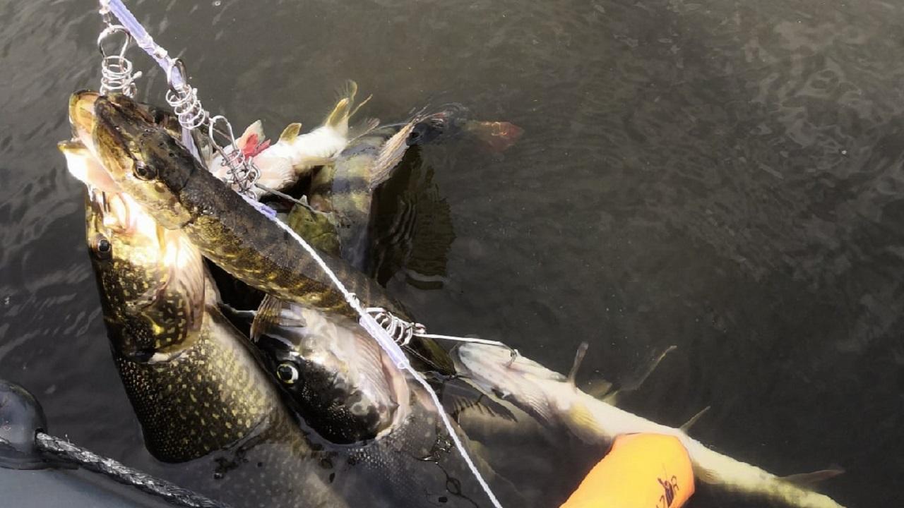Щучий рай: любительница рыбалки из Челябинска похвасталась небывалым уловом