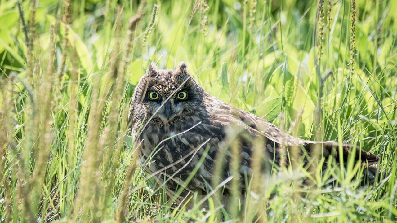 Ехидную птицу с пронзительным взглядом нашли в Челябинской области