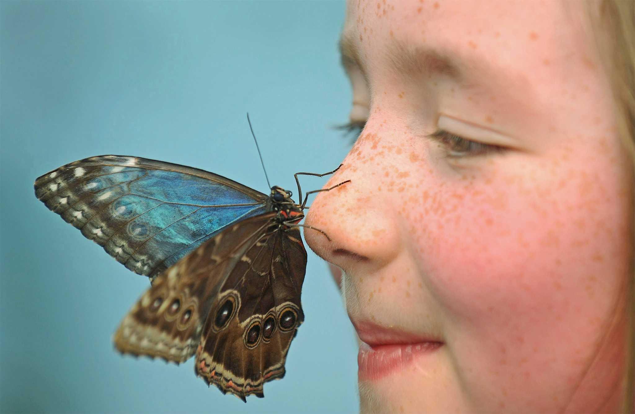 Все приметы про бабочек и божьих коровок: о чем предупреждают насекомые