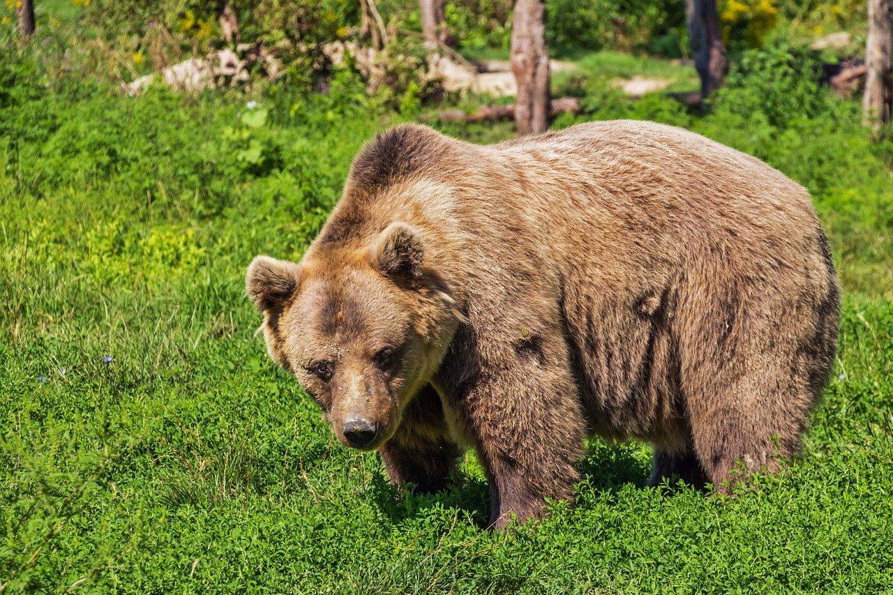 Опасная встреча: туристы в Челябинской области столкнулись с медведем