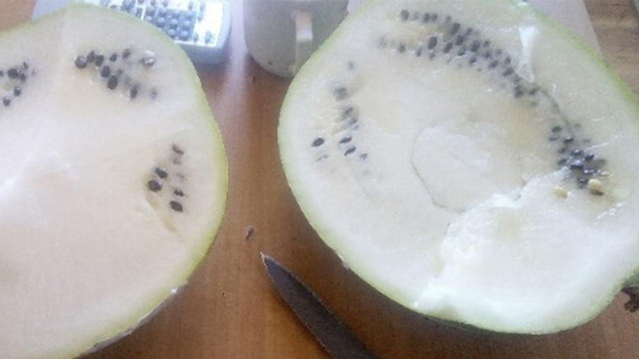 Альбинос без вкуса: в Челябинской области покупателю продали белый арбуз