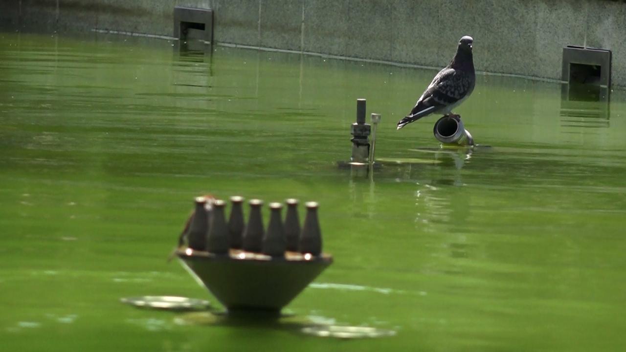 Напоминает болото: в главном фонтане Челябинска позеленела вода